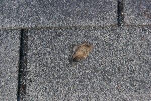 Roof Hail Damage Roofers Lakewood Maintenance
